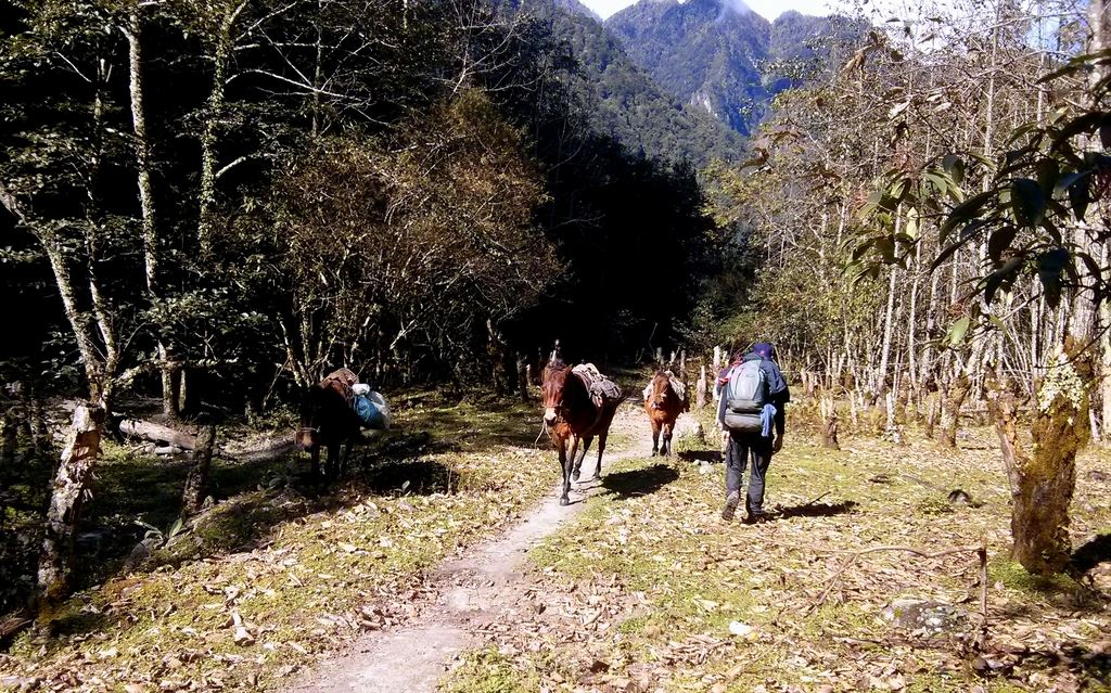 Horses on their way to Xiongdang village