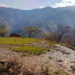 abandoned rice paddy