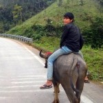 Man riding a water buffalo