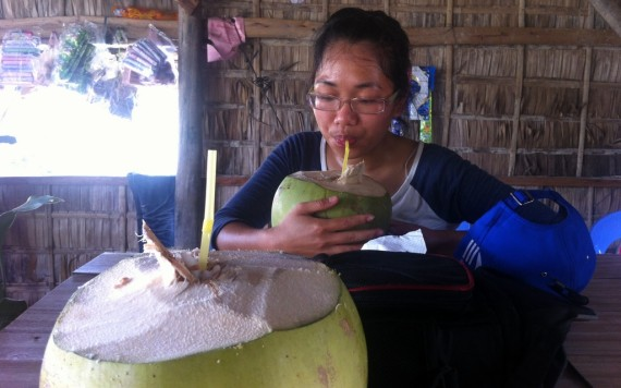 When a coconut is allowed to grow too large and is not kept cool, its juice becomes sour with an alcohol-like twang