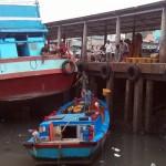 Fish being hauled ashore