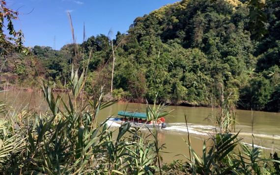 Boat tour to the Wangtianshu 望天树