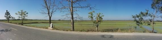 Loads of rice paddies on the way