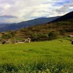 Highland barley fields