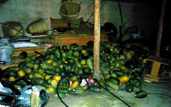 The guesthouse owner likes to collect gourds